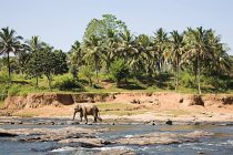 Elefant läuft an Wasserstelle im Sonnenlicht — Stockfoto