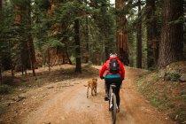 Pet dog running alongside cyclist, Sequoia National Park, California, USA — Stock Photo