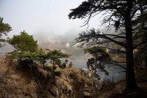 Живописный вид на долины Напа, Калифорния, США — стоковое фото