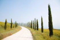 Ciprestes e estradas rurais — Fotografia de Stock