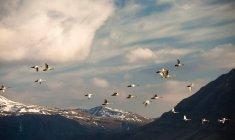 Flock of birds flying above mountain landscape — Stock Photo
