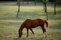 Pferd weidet im Sonnenlicht auf der grünen Wiese — Stockfoto