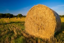 Haystack on field in bright sunlight — Stock Photo