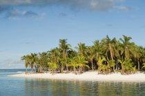 Пляж с пальмами — стоковое фото