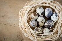 Nido de codornices huevos - foto de stock