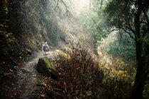 Собака работает на грязи путь в лесу — стоковое фото