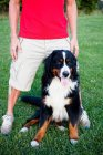 Cropped image of man standing near dog on lawn — Stock Photo