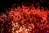 Lumières vives de fibre optique rouge — Photo de stock