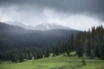 Valle verde, pinos y montañas con nubes bajas - foto de stock