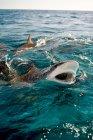 Requins, surfaçage et les éclaboussures d'eau dans la lumière du soleil — Photo de stock