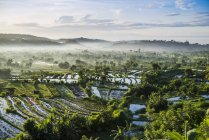 Rizières vertes avec palmiers et ciel nuageux — Photo de stock
