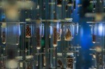 Fermeture des échantillons scientifiques dans des conteneurs de stockage — Photo de stock