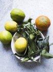 Вид сверху цитрусовых плодов и листьев в миске — стоковое фото