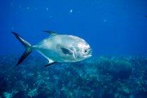 Перегляд дозволу риби під водою — стокове фото