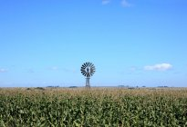 Windmill in corn field under blue sky — Stock Photo