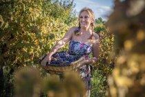 Mujer con cesta de uvas en el viñedo, Quartucciu, Cerdeña, Italia - foto de stock