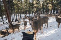Hand holding out food for deer herd — Stock Photo