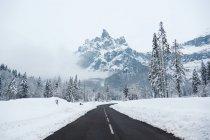 Strada vuota con pini dello snowy — Foto stock