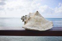 Muschel auf Geländer mit Meer und blauem Himmel im Hintergrund — Stockfoto