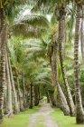 Пальмові дерева та шлях — стокове фото