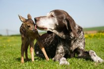 Fawn and dog sitting on green grass — Stock Photo