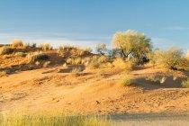 Песчаные дюны с деревьями и кустарниками, Африка — стоковое фото