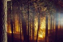 Incendie de forêt, parc national de Yosemite, Californie, États-Unis — Photo de stock