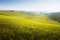 Cipressi e una strada rurale — Foto stock