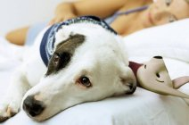Dog on bed with toy and owner — Stock Photo
