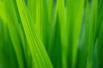 Зеленые травинки — стоковое фото
