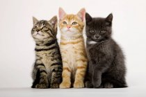 Вид спереди трех котят рядом — стоковое фото