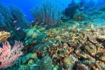 Pesci che nuotano nella barriera corallina — Foto stock