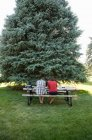 Teenage couple studying on picnic table in park, rear view — Stock Photo