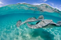 Blue sky and stingrays swimming under water — Stock Photo