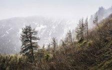 Ліс на засніжені гори, Penser Жош, Південний Тіроль, Італія — стокове фото