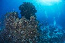 Escolarización de peces nadando en los arrecifes de coral - foto de stock