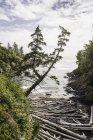 Registri di Driftwood sparsi sulla spiaggia, Wild Pacific Trail, isola di Vancouver, Columbia britannica, Canada — Foto stock