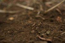Primo piano di fruttuoso terreno marrone, sfondo sfocato — Foto stock