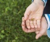 Обітнутого зображення руки хлопчик холдингу комах — стокове фото