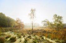 Reserva natural en el sur de Holanda, mañana de otoño, Noord-Brabant, Países Bajos - foto de stock