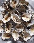 Austernschalen auf Meersalz — Stockfoto