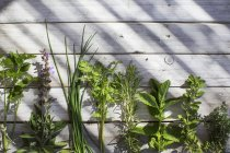 Selection of herbs in a row on wooden surface, top view — Stock Photo