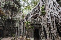 Temple de Ta Prohm près d'Angkor Wat, Siem Reap, Cambodge — Photo de stock