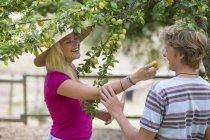 Casal jovem comendo ameixa de árvore na fazenda orgânica — Fotografia de Stock