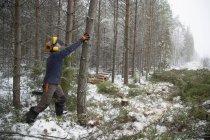 Logger pushing tree, Tammela, Forssa, Finland — стоковое фото