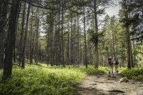 Vista posteriore di adolescente e giovane escursionista femminile escursioni nella foresta, Red Lodge, Montana, Stati Uniti d'America — Foto stock