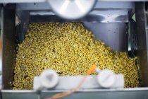 Close up of Organic tofu production factory — Stock Photo