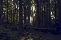 Шайби Глен, Dunoon, Argyll і б'ють, Шотландія. — стокове фото