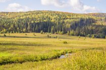 Scenic view of Field and trees, Ural, Russia — Stock Photo