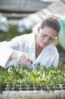 Scientifique femelle nourrissant des échantillons de plantes avec une pipette avec du liquide — Photo de stock